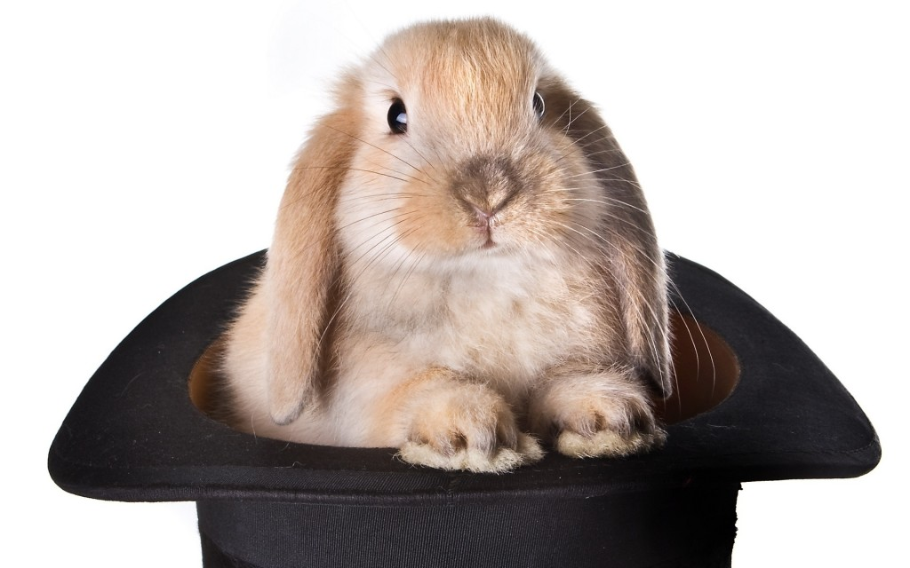 rabbit-in-hat-pic